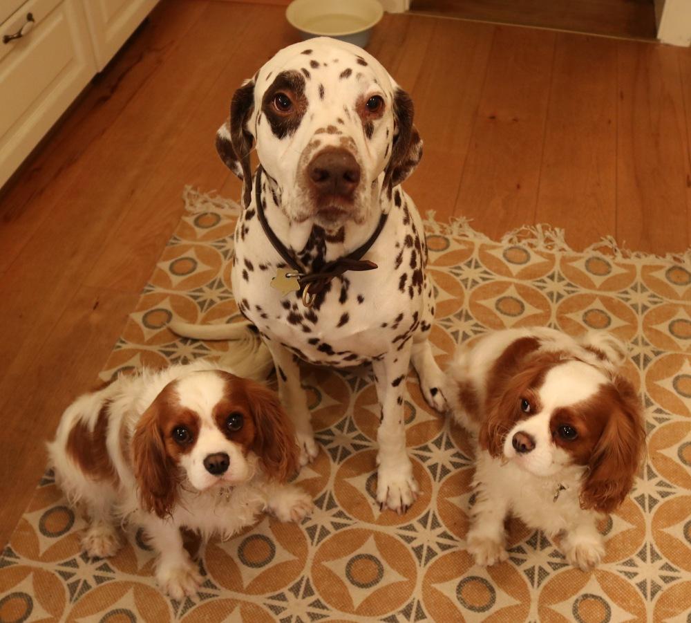 Hunde Okt 2017 in Küche